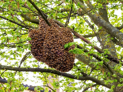 Lessons from the Hive